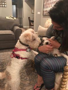 Larky Loo just meeting Romeo