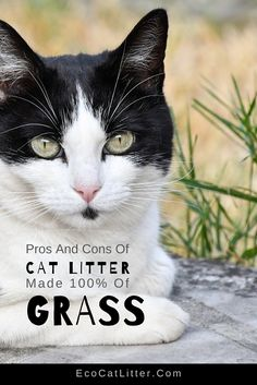 What is grass cat litter, and how does it work? Discover the pros and cons of this natural cat litter to decide if it is the right fit for your and your cat. Natural Cat Litter, Pet Grass, Cat Diet, Clumping Cat Litter, Grass Seed, Cat Health, Litter Box, Biodegradable Products