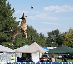 Rocky Mountain Dockdogs, Broomfield, CO | A Travel for Taste