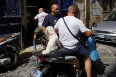 Hund auf Moped, Napoli, Italy Naples Italy, Amalfi Coast, Baby Strollers, Children, Dogs, Animals, Pet Dogs, Baby Prams, Young Children