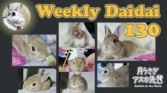 Weekly daidai 130