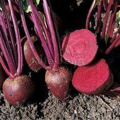 Detroit Dark Red Beet Seed * 1 Gram 70 Seeds * Beta vulgaris * Beetroot Vegetable Seed  * Non-Gmo Heirloom