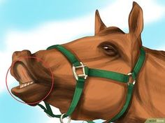 3 Ways to Understand Horse Communication - wikiHow