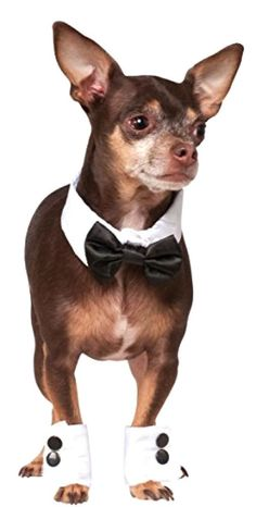 Rubies Costumes Pet Supplies Bow Tie Cuff Dog Costume Small Medium Pet Supplies #RubiesCostumeCo