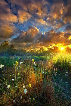 Heaven Knows by Phil Koch on 500px