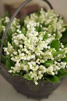 Pildiotsingu huge lily of the valley bouquet tulemus Flowers Nature, My Flower, Spring Flowers, White Flowers, Beautiful Flowers, Simply Beautiful, Beautiful Pictures, Valley Flowers, Blossom Garden