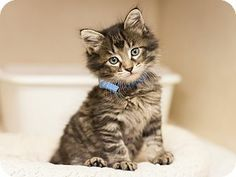 ADOPTED!  Meet Twig, a male kitten for adoption at East Lake Pet Orphanage (#ELPO).
