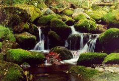 Muniellos natural reserva- Asturias- Spain