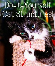 DIY cat trees, homemade towers, cat condos, and other play structures are easy to make, even if you don't have a lot of building experience. Here are all the supplies and instructions you need!                                                                                                                                                                                 More