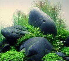 Wasserpflanzendünger - Aquascaping - Wasserpflanzen - Aqua Rebell