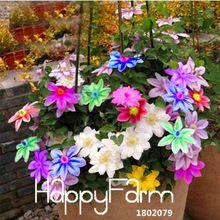 Grote Verkoop! Bonsai Clematis Bollen Draad Lotus Plant Zaden Multicolor Clematis Klimmen planten Zaden 50 Deeltjes, #60GXP9(China (Mainland))