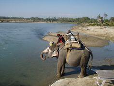 Elefantenbad im Rapti River in Sauraha (c) Peter Belina