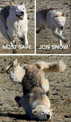 Ghost was really just Moon Moon in disguise. Game of Thrones funny meme