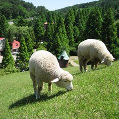 Rokkosan pasture
