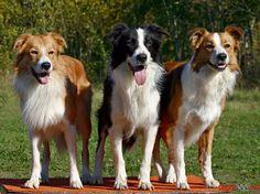 Animais Dog fotos
