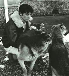 Alain Delon & his GSDs
