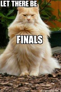 Make funny memes with our meme generator and share it with friends! Finals Motivation, Study Motivation, A Funny, Funny Memes, Hilarious, You Shall Not Pass, Study Tips, Make Me Smile, Animal Pictures