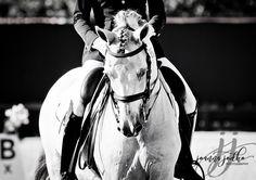 if you haven't found it yet keep looking  Steve Jobs #jjodkophoto #equestrian #equinephotography #blackandwhite #beautiful #whitehorse #horseshow #horse #kon #paard #pferd #cavallo #caballo #dressage #dressur #ujezdzenie #wellington #palmbeachequine #florida