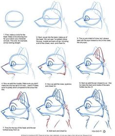 Drawing a Cartoon Wolf - Art how to draw a wolf - Drawing Tips Drawing Techniques, Drawing Tips, Drawing Reference, Drawing Sketches, Drawing Ideas, Sketching, Dog Drawing Tutorial, Learn Drawing, Anatomy Reference