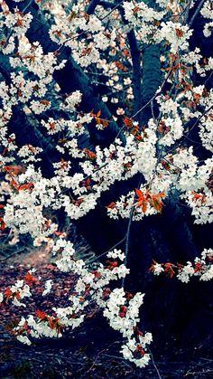 1080x1920 Wallpaper spring, flowering, tree, gloomy
