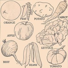 Vegetable Drawings 20 Ideas About Vegetable Drawing Drawings How To Draw Hands And More
