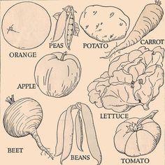 Week Four: Vegatables....Vegetable line drawings