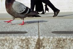 Go on more walks and feed the pigeons food I buy that are not good for me :p
