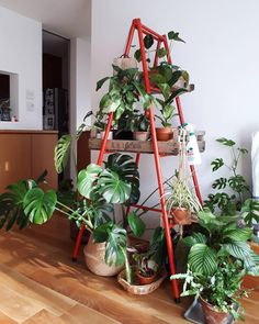 decor | plant | plants | ladder | red | bohemian | home | house