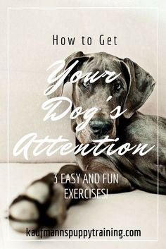 How to get your dog's attention: 3 easy and fun exercises! at kaufmannspuppytraining.com @KaufmannsPuppy