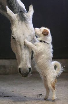 Friends. Horse and dog . Please also visit www.JustForYouPropheticArt.com for colorful, inspirational art and stories. Thank you so much! Blessings!