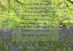 The Bluebell - Anne Bronte Wild Bluebell, Blue Bell Flowers, Wuthering Heights, Love Hug, Flower Quotes, Of My Life, Quotations, Poems, Inspirational Quotes