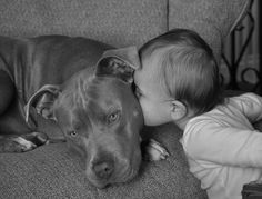 Pitt Bulls. oh goodness I want one so bad. I love these dogs