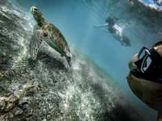 Here is how you can swim and snorkel with turtles for CHEAP and without a guide in the gorgeous Akumal, Mexico 2018 Akumal Mexico, Once In A Lifetime, Marine Life, Snorkeling, Scuba Diving, Travel Guides, Turtles, Adventure Travel, Travel Inspiration