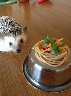 Q: Do they eat gourmet cuisine? | 15 Things You Always Wanted To Know About Hedgehogs But Were Afraid To Ask