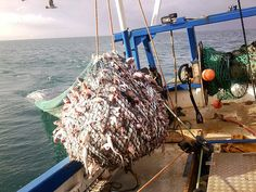 (A side-trawl) Photo from 'Coastal Nets :: Trawls & Trawl netting for commercial fishing'