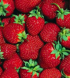 Growing Strawberries – How To Plant And Grow Your Own This Year! growing strawberries how to plant a Strawberry Garden, Strawberry Patch, Strawberry Plants, Strawberry Fields, Fruit Garden, Edible Garden, Garden Plants, Grow Strawberries, Strawberry Jam