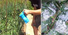 Fungicida+casero+y+barato+para+las+plantas