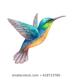 watercolor illustration, flying hummingbird isolated on white background, exotic, tropical, wild life clip art Illustration Colibri, Hummingbird Illustration, Hummingbird Drawing, Watercolor Hummingbird, Watercolor Bird, Watercolor Illustration, Watercolor Paintings, Vogel Clipart, Art Colibri