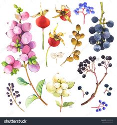 Watercolor Illustration With Branches, Leaves And Berries. Illustration With Branches, Leaves And Berries. Watercolor Set Of Winter And Autumn Forest Plants. Collection Of Herbarium Garden. - 342609140 : Shutterstock