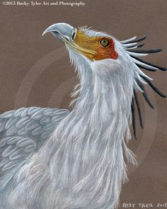 Secretary Bird Fine Art Print by BeckyTylerArt on Etsy