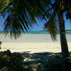 Welcome to paradise! #andros #island #bahamas