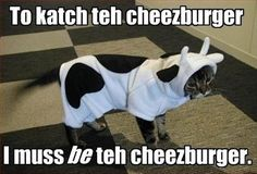 Funny animals with quotes - Gallery
