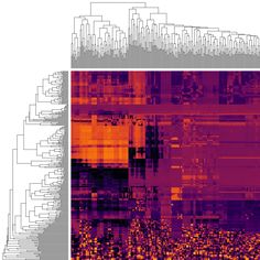 Make Patterns Pop Out of Heatmaps with Seriation