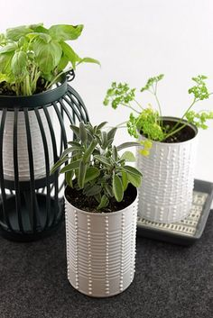 Upcycled plant containers