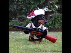 """I'mz a huntin' dog"" - Crusoe Celebrity Dachshund - YouTube"
