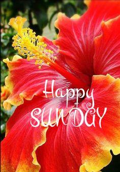 Happy Sunday Images, Good Morning Sunday Images, Good Morning Flowers, Good Morning Good Night, Good Morning Quotes, Sunday Morning Wishes, Sunday Morning Coffee, Morning Blessings, Good Morning Greetings