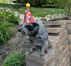 Hey jackass! You said there'd be cake?!?!?