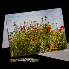 Red Poppies, Red Flowers, Remembrance Day, Blank Cards, Photo Greeting Cards, Note Cards, Notes, Etsy Shop, Pacific Northwest