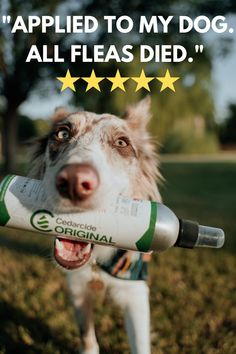 Family-Safe Bug Spray that supports Animal Rescue 🐾💚 Cute Baby Animals, Animals And Pets, Dog Flea Remedies, Meds For Dogs, Cute Dogs And Puppies, Doggies, Pet Safe, Dog Care, Fleas
