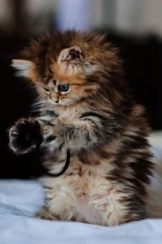 <3 Could this kitten be any cuter?